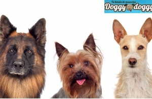 http://oferplan-imagenes.larioja.com/sized/images/doggy16-300x196.jpg