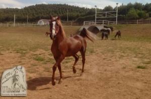 Paseo o clase de equitación en pony o caballo en verano