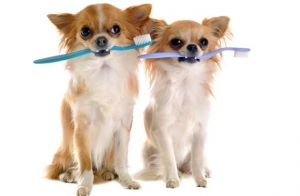 Limpieza bucal completa para tu perro
